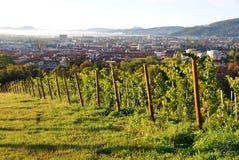Wijngaarden boven de stad, Maribor, Slovenië royalty-vrije stock foto's