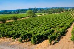 Wijngaarden in Californië royalty-vrije stock fotografie