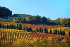 Wijngaarden in Chianti in Toscanië Stock Fotografie