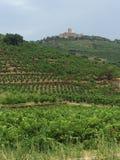 Wijngaarden in Collioure Frankrijk Stock Fotografie