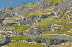 Wijngaarden in de bergen Stock Afbeeldingen