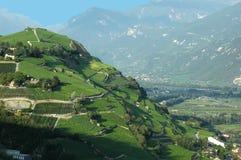Wijngaarden in de bergen Stock Fotografie