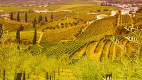 Wijngaarden in de Douro-riviervallei tussen Peso DE Regua en Pinhao, Portugal stock afbeeldingen