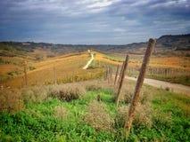 Wijngaarden in de herfst Stock Foto's