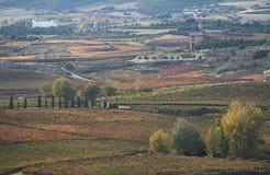 Wijngaarden in de herfst Royalty-vrije Stock Afbeeldingen