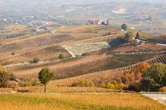 Wijngaarden in de herfst en heuvelslandschap in Barolo, Italië Royalty-vrije Stock Foto