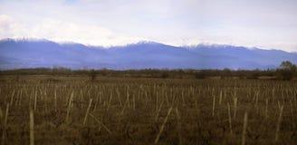 Wijngaarden in de lente tegen de achtergrond van de bergketen royalty-vrije stock foto
