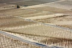 Wijngaarden in de sneeuw Stock Foto
