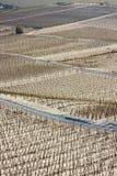 Wijngaarden in de sneeuw Royalty-vrije Stock Foto's