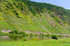 Wijngaarden in de vallei van Moezel Royalty-vrije Stock Afbeeldingen