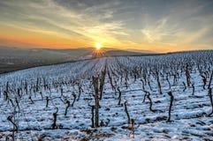Wijngaarden in de winter bij zonsondergang Stock Foto