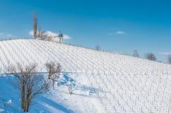 Wijngaarden in de winter, Oostenrijk Stock Foto's
