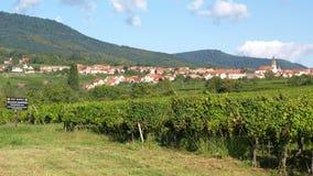 Wijngaarden dichtbij Barr Stock Foto