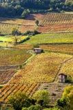 Wijngaarden dichtbij Beaujeu Royalty-vrije Stock Foto's