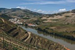 Wijngaarden dichtbij Duoro-rivier in Pinhao, Portugal stock foto