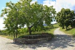 Wijngaarden in Duitsland Royalty-vrije Stock Foto's