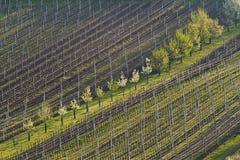 Wijngaarden en bloeiende fruitbomen in de lente Royalty-vrije Stock Afbeelding
