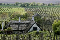 Wijngaarden en Boerderij bij Meer Balaton stock afbeeldingen