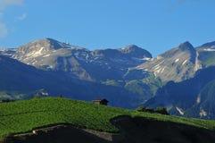 Wijngaarden en de Hellingen van de Ski Stock Fotografie