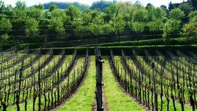 Wijngaarden en fruitbomen bij de heuvel Stock Afbeeldingen