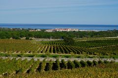Wijngaarden en haven van Argeles sur mer stock fotografie