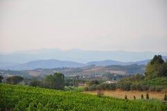 Wijngaarden en heuvels Florence Toscanië royalty-vrije stock foto