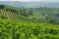 Wijngaarden en heuvels van het Langhe-gebied Piemonte, Italië royalty-vrije stock foto