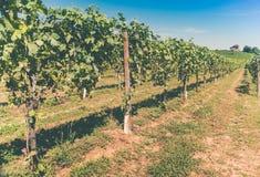 Wijngaarden en huis onder de zon Stock Foto's