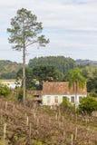 Wijngaarden en landbouwbedrijven in de winter, de vallei van Dos Vinhedos van het Dal stock foto