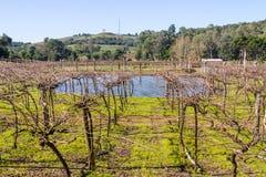 Wijngaarden en landbouwbedrijven in de winter, de vallei van Dos Vinhedos van het Dal royalty-vrije stock afbeeldingen