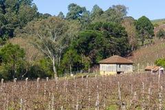 Wijngaarden en landbouwbedrijven in de winter, de vallei van Dos Vinhedos van het Dal royalty-vrije stock fotografie