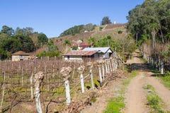 Wijngaarden en landbouwbedrijven in de winter, de vallei van Dos Vinhedos van het Dal stock foto's