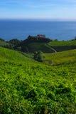 Wijngaarden en landbouwbedrijven voor de productie van witte wijn stock foto's