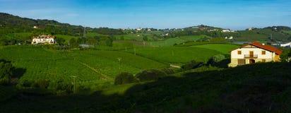 Wijngaarden en landbouwbedrijven voor de productie van witte wijn royalty-vrije stock afbeelding