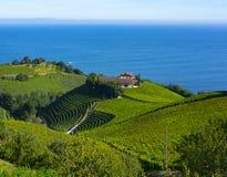 Wijngaarden en landbouwbedrijven voor de productie van witte wijn royalty-vrije stock foto