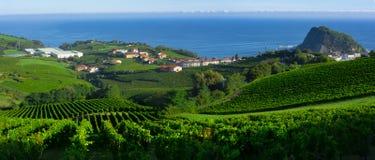Wijngaarden en landbouwbedrijven voor de productie van witte wijn met het overzees op de achtergrond stock afbeelding