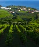 Wijngaarden en landbouwbedrijven voor de productie van witte wijn met het overzees op de achtergrond royalty-vrije stock fotografie