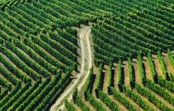 Wijngaarden en landweg Royalty-vrije Stock Afbeeldingen