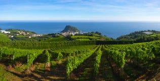 Wijngaarden en wijnproductie met het Cantabrische overzees op de achtergrond royalty-vrije stock foto