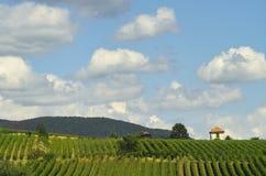 Wijngaarden en wolken royalty-vrije stock fotografie