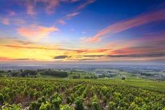 Wijngaarden en zonsopgang, Beaujolais, de Rhône, Frankrijk Royalty-vrije Stock Afbeeldingen