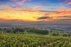 Wijngaarden en zonsopgang, Beaujolais, de Rhône, Frankrijk Stock Foto's