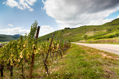 Wijngaarden in Frankrijk stock foto