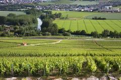 Wijngaarden - Hautvillers dichtbij Reims - Frankrijk Stock Fotografie