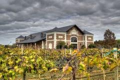 Wijngaarden HDR Royalty-vrije Stock Afbeelding