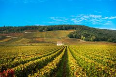 Wijngaarden in het de herfstseizoen, Bourgondië, Frankrijk royalty-vrije stock afbeeldingen