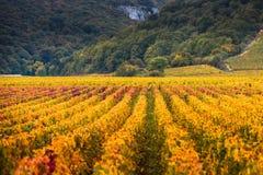 Wijngaarden in het de herfstseizoen, Bourgondië, Frankrijk royalty-vrije stock foto's