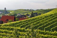 Wijngaarden in het Zwarte Bos Royalty-vrije Stock Foto's