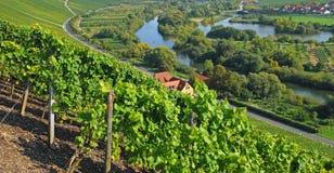 Wijngaarden, HoofdRivier, Duitsland stock afbeelding