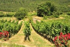 Wijngaarden, Kloven du de Tarn, Frankrijk Stock Afbeeldingen
